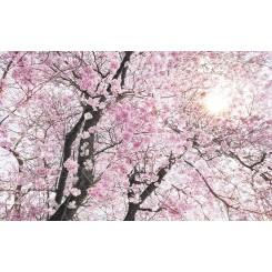 Bloom 4 dele