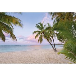 Paradise Morning 4